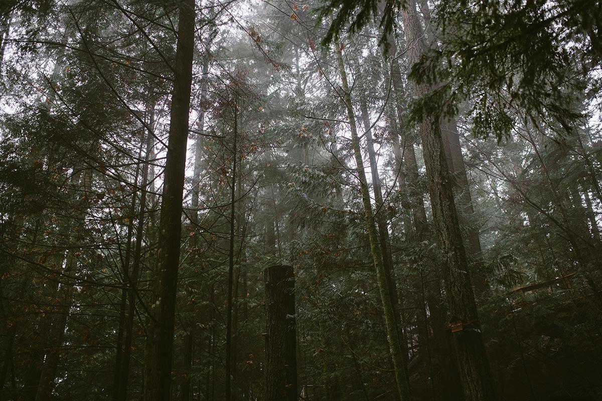 vancouver capilano trees