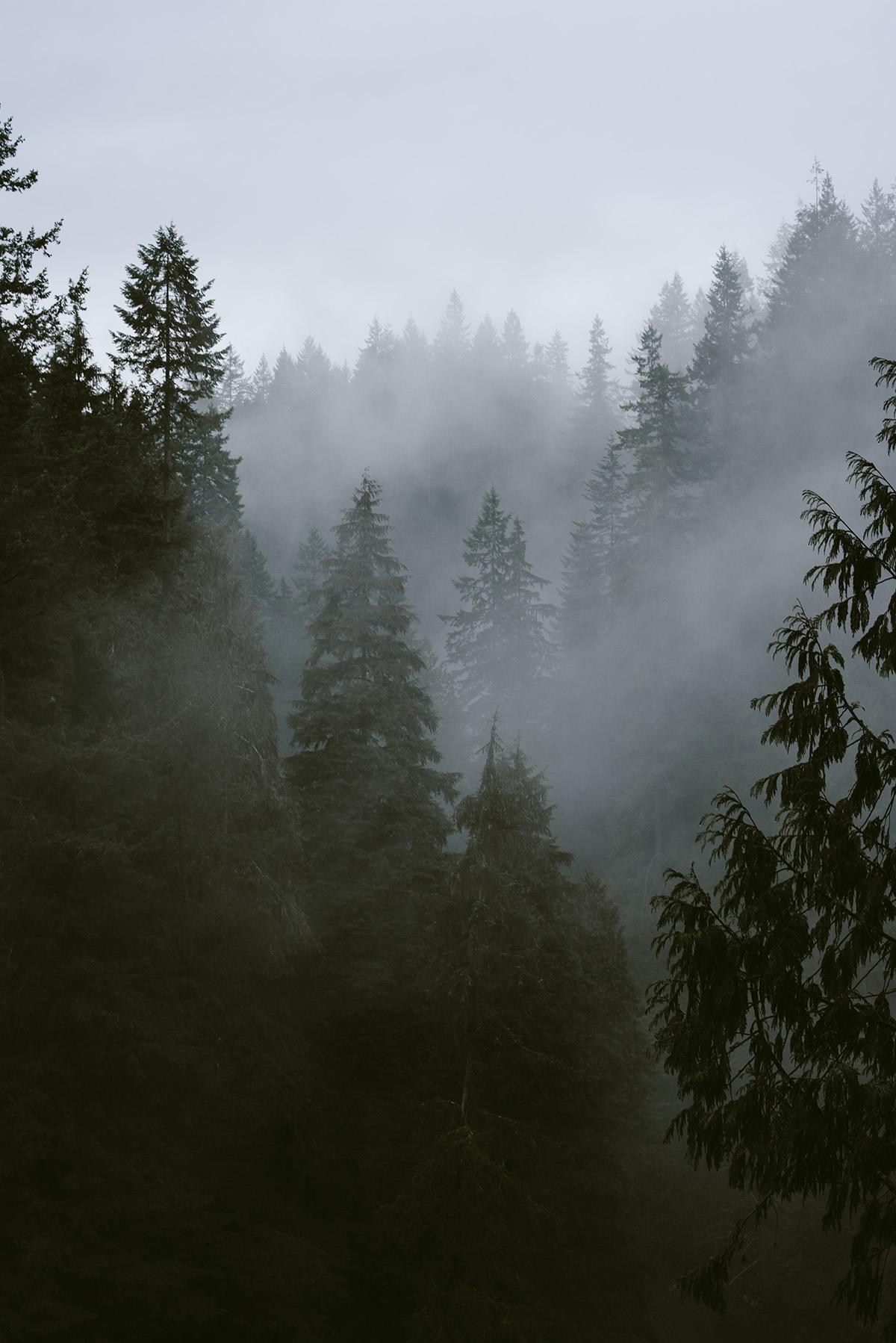 vancouver capilano foggy trees