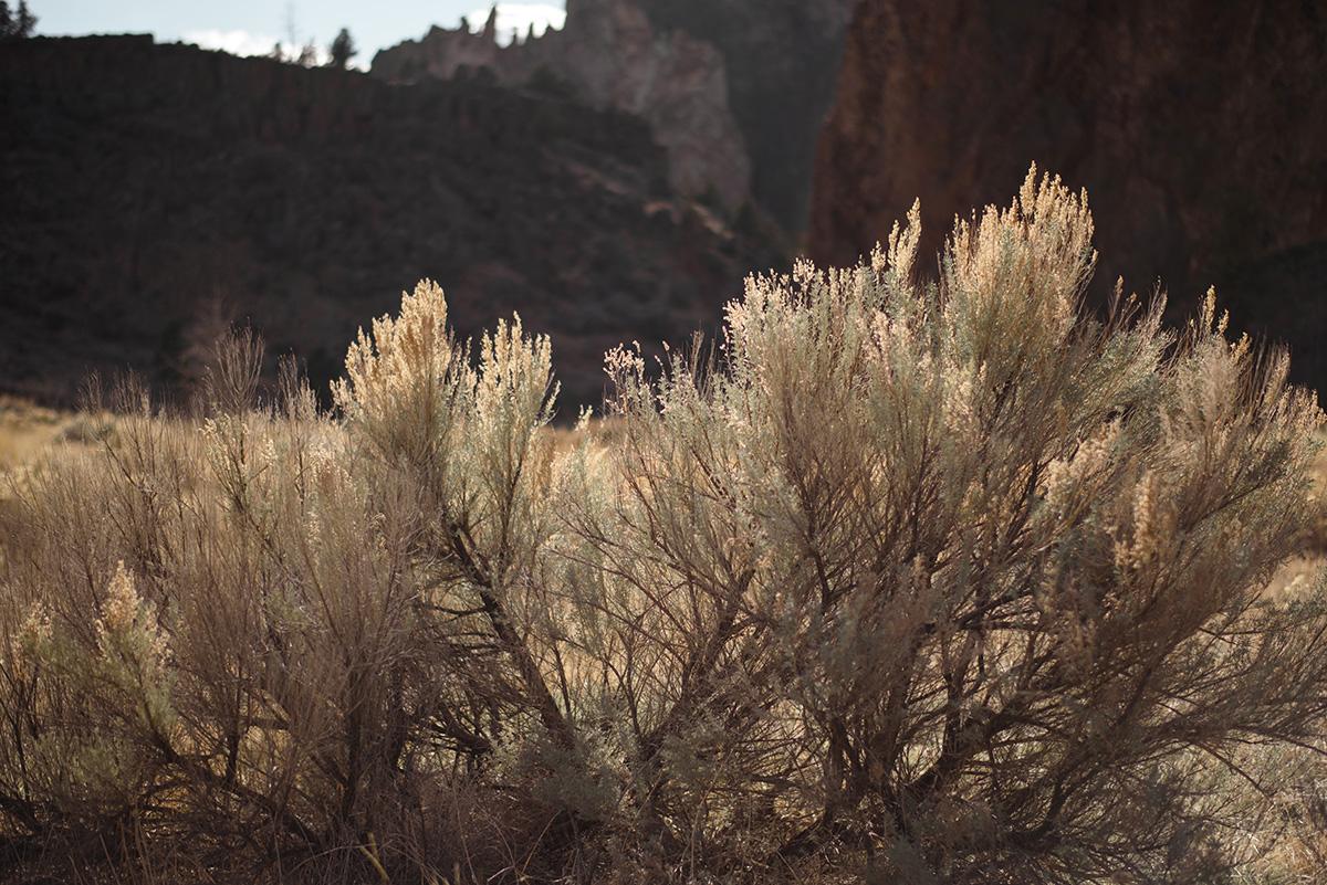 smith rock flora